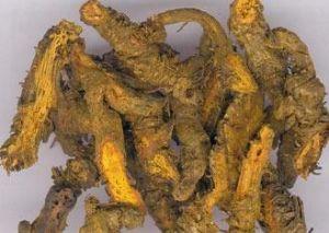 农产品黄连实物图